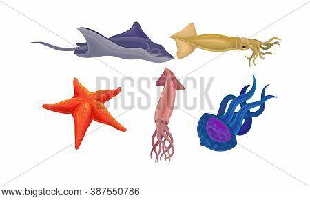 Marine Habitant With Starfish And Squid Vector Set