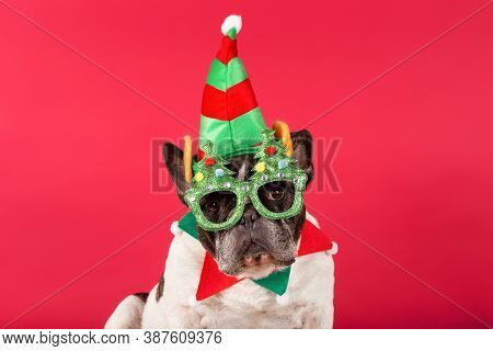 Elf - French Bulldog Dressed Up As A Christmas Elf With Christmas Glasses On A Red Background.