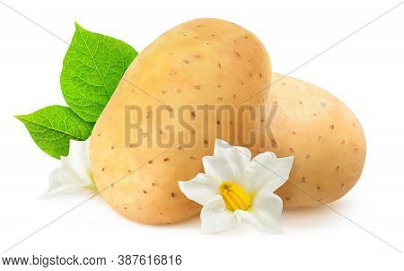 Isolated Potatoes. Two Raw Potato Fruits, Leaves And Flowers Isolated On White Background
