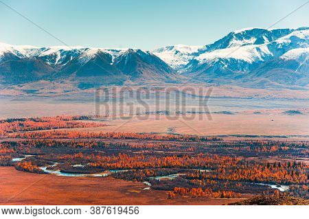 Kurai Steppe And View Of North-chuya Mountain Ridge In Altai, Siberia, Russia. Yellow Trees And Snow