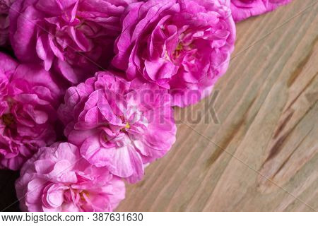 Many Blossoming Flowers Of A Pink Tea House, Wooden Background, Texture. Place For Text