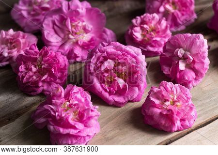 Many Blossoming Flowers Of A Pink Tea House, Wooden Background, Texture.