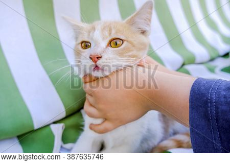 Childrens Hands Squeeze The Kittens Neck. The Child Holds The Kitten By Force, A Bad Unsuccessful At