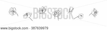 Hand Drawn Anemone Flower Set. Outline Floral Collection Painted By Ink. Black Isolated Sketch Vecto