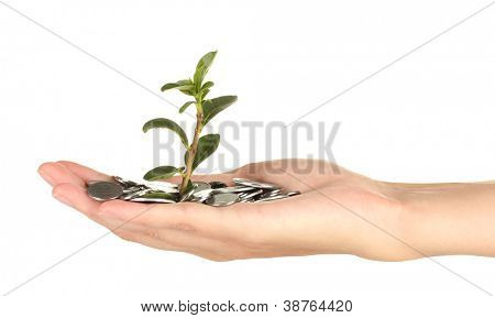 woman's hand are holding a money tree on white background close-up
