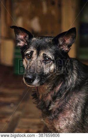 Cute Dog (dog, Scared, Frightened) Close Up