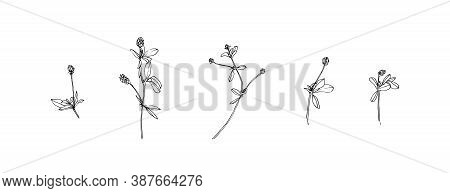 Set Of Hand Drawn Wild Plants. Outline Meadow Herbs With Leaves Painted By Ink. Black Isolated Sketc