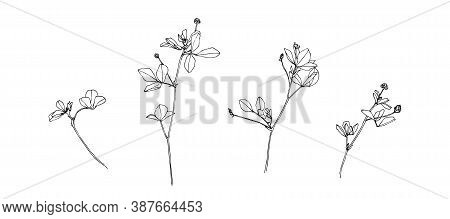 Hand Drawn Blossom Wild Plants. Outline Flowers Painted By Ink. Black Isolated Sketch Vector On Whit