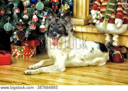 Happy New Year Dog At The Christmas Tree At Christmas
