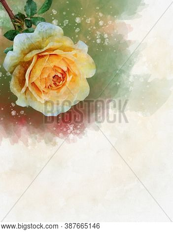 A Watercolor Drawing Of A Vibrant Yellow Rose Flower. Botanical Art. Decorative Element For A Greeti