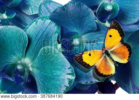 Beautiful Orchids Flower And Orange Butterfly Close Up. Blue Orchid Flowers And Butterfly