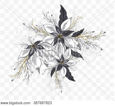 Vector Poinsettia Flower Isolated On Transparent  Background. Hand-drawn Doodle In Realistic Style,