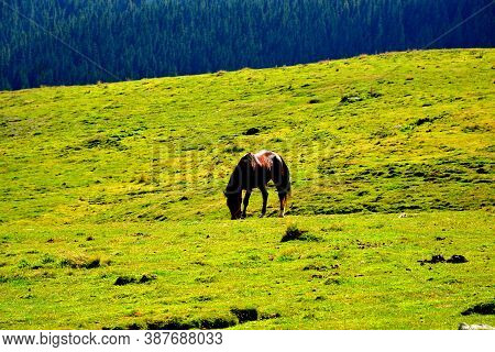 Bucegi Masif In Carpathian Mountains.typical Landscape In The Forests Of Transylvania, Romania. Gree