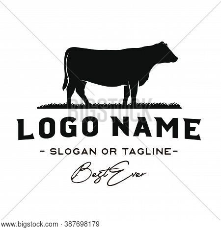 Angus, Angus Beef, Vintage Cattle / Beef Logo Design Inspiration Vector
