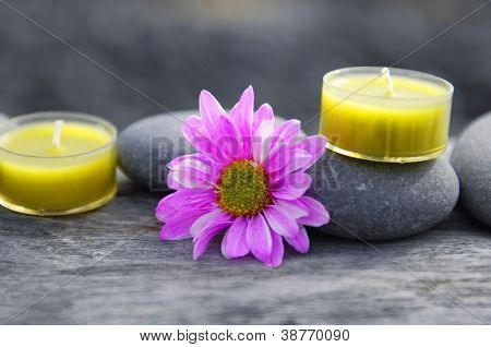 gerbera flower and two yellow candle on driftwood texture