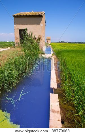 Green rice fields in El Saler Valencia with irrigation and farming tools warehouse
