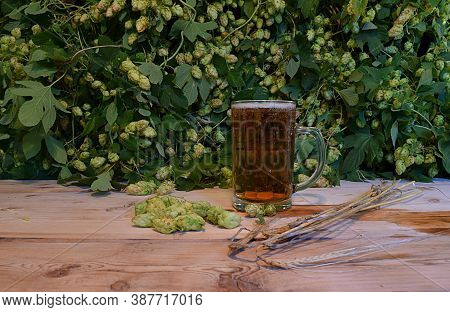 Beer In A Glass Mug, Spikelets Of Barley And Fruits Of Hops On A Wooden Table Against A Background O