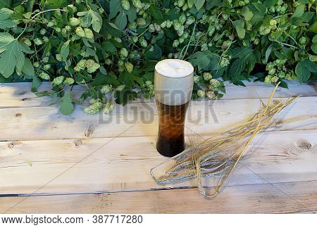 Beer In A Glass, Spikelets Of Barley And Fruits Of Hops On A Wooden Table Against A Background Of Ho