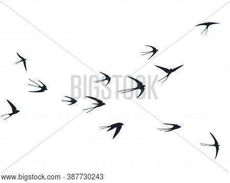 Flying Swallow Birds Silhouettes Vector Illustration. Nomadic Martlets Bevy Isolated On White. Rapid