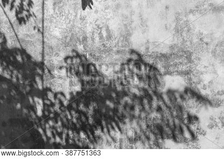 Abstract Concrete Wall With Shadow Of Boughs And Leaves.