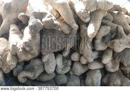 Nutritious And Healthy Yam. Chinese Fresh Yam.