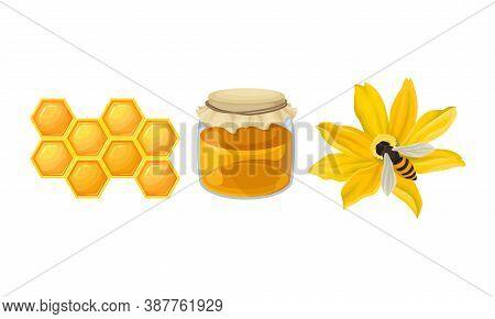 Honey Omb With Hexagonal Wax Cells And Flower With Honeybee Vector Set
