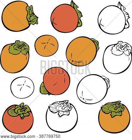 Vector Set Of Different Persimmons Isolated. Ripe And Silhouettes Persimmons. Concept For Fruit Stor