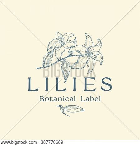 Flowers Abstract Vector Sign, Symbol Or Logo Template. Hand Drawn Sketch Lilies Branches Illustratio