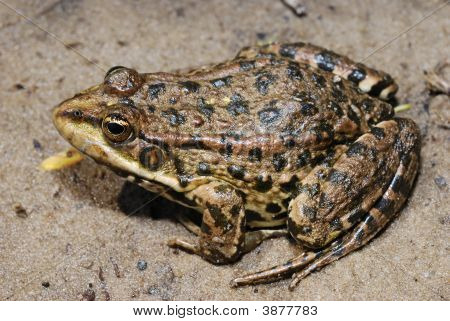 Close-Up Photo Of Frog