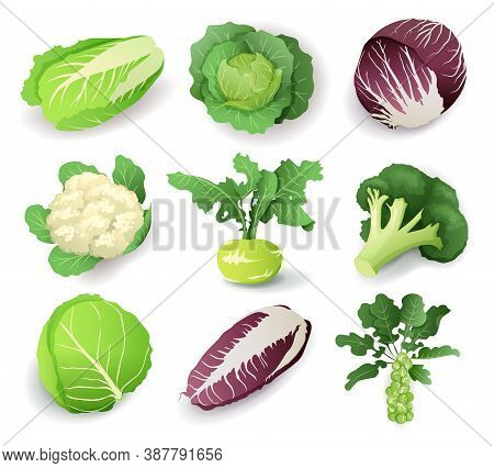 Set With Different Kinds Of Cabbage, Isolated On White Background. Cruciferous Vegetables Cartoon Ve