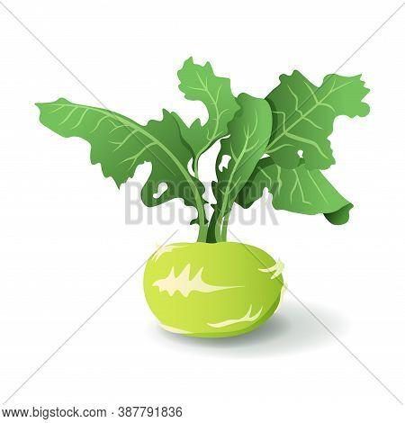 Kale Turnip With Leaves, Isolated On White Background. Organic Kohlrabi Cabbage. Tasty Cruciferous V