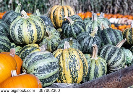 A Heap Of Pumpkin, Green Acorn And Orange In The Countryside Farm Market. Decorative,  For Cooking A