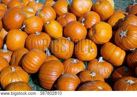 A Heap Of Different Pumpkins For Thanksgiving Day And Halloween Holiday.