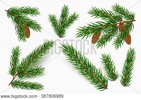 Vector Fir Tree Branches Isolated On White Background. Realistic Green Pine Branch With Cones. Desig