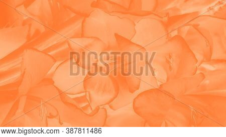 Trendy Color Amberglow Gradient Background. Gladiolus Flower Pattern, Panorama
