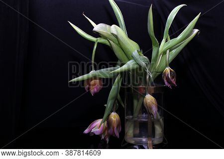 Faded Tulips. A Bouquet Of Faded Tulips Stands In A Vase On A Black Background. Faded Flowers.the Ho