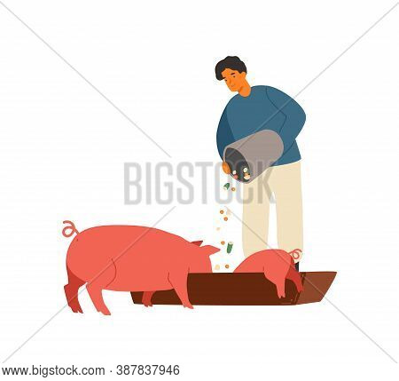 Farmer, Rancher Man Feeding Pig With Vegetables. Piglet Eating From Wooden Trough. Agricultural Work