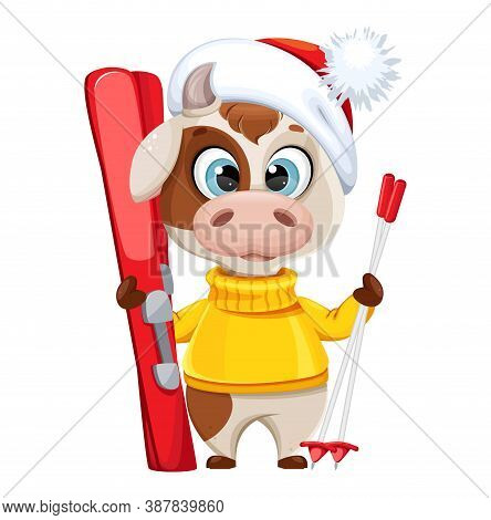 Funny Bull With Skis. Cute Bull Cartoon Character In Sweater, The Symbol Of Chinese New Year 2021. V