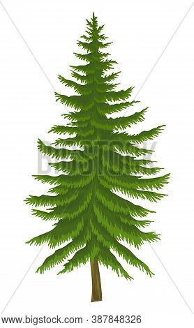 Cartoon Illustration Of Fir-tree Isolated At White Background. Evergreen Tree. Nature Concept. Vecto