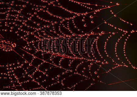 Close-up Photo Of Autumn Spyder Web With Dew Drops In The Red Lighting