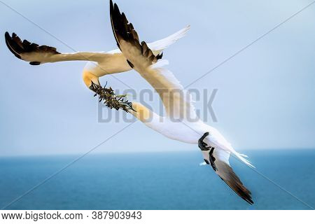 Shot Of A Colony Of Northern Terns Nesting In Germany. Marine Bird. Animals In Wild. Two Northern Te