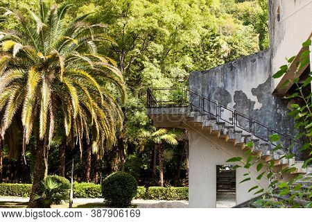 Subtropical Climate Of The Caucasus. Garden In The City Of Gagra, Abkhazia.