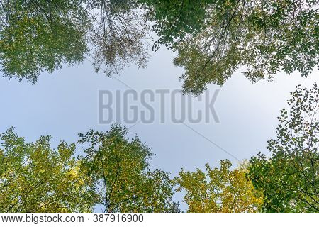 Looking Up Through The Treetops. Beautiful Natural Frame Of Foliage Against The Sky. Copy Space.gree
