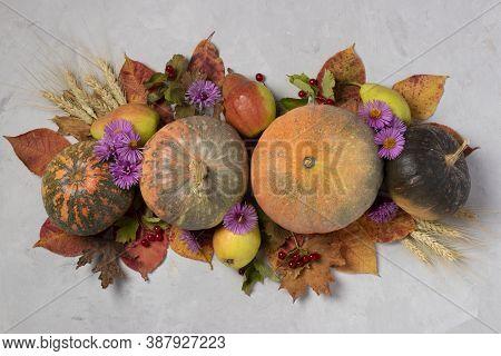 Autumn Harvest: Pumpkins, Pears, Leaves, Viburnum, Flowers And Ears Of Wheat On Gray Background. Cen