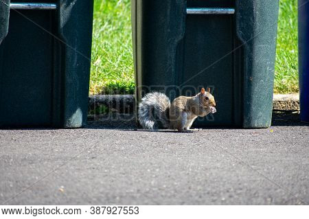 A Squirrel Eating In A Blacktop Driveway In Front Of A Trash Can