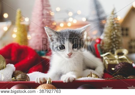 Adorable Kitten Sitting In Box With Santa Hat, Christmas Baubles, Tree And Ornaments In Lights