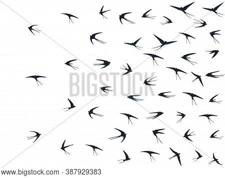 Flying Martlet Birds Silhouettes Vector Illustration. Migratory Martlets Bevy Isolated On White. Fas