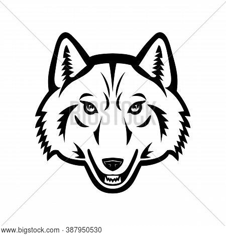 Black And White Mascot Illustration Of Head Of An Arctic Wolf, White Wolf Or Polar Wolf, A Subspecie