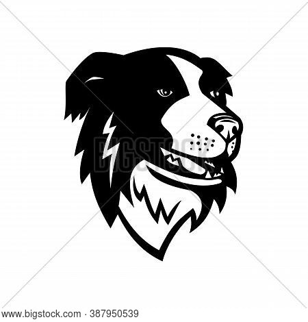 Mascot Illustration Of Head Of A Border Collie Or Scottish Sheepdog, A Working And Herding Dog Breed