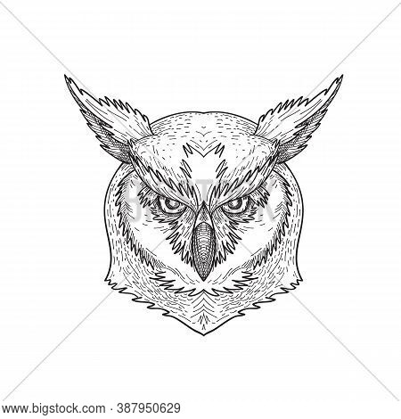 Black And White Drawing Sketch Style Illustration Of A Head Of An Angry And Aggressive Great Horned